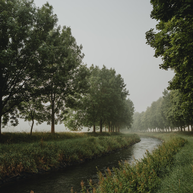 """The bend of river between trees in misty morning"" stock image"