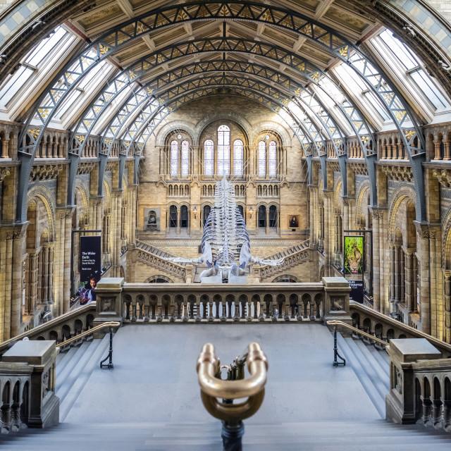 """Natural History Museum, London"" stock image"