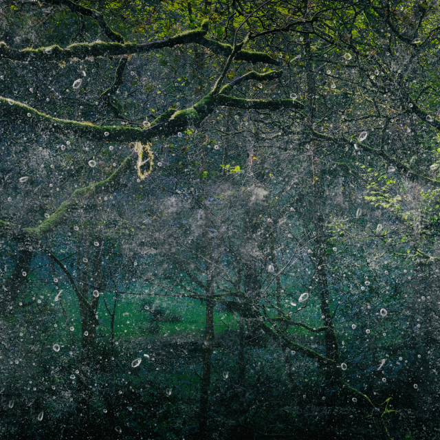"""""""Forest Light Encounters #002"""" stock image"""