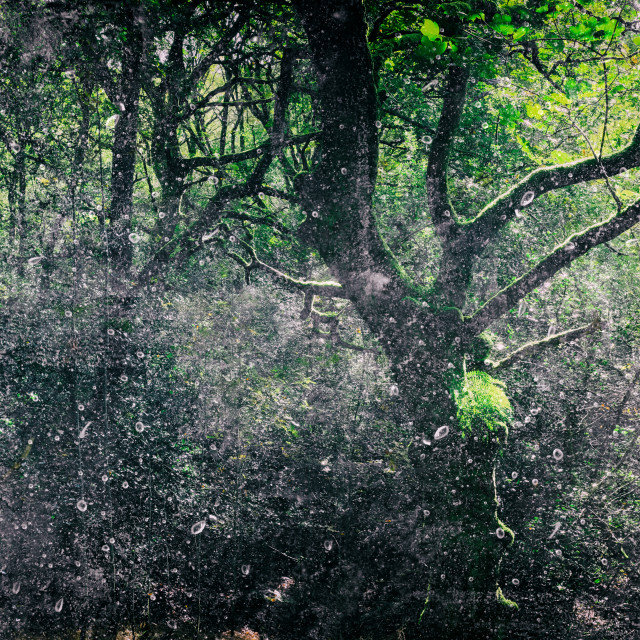 """""""Forest Light Encounters #003"""" stock image"""