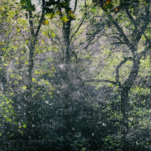 """""""Forest Light Encounters #006"""" stock image"""
