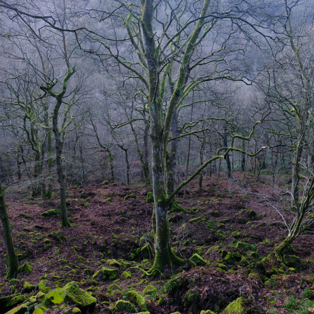 """""""Trees Revealing Themselves - Hardcastle Crags"""" stock image"""