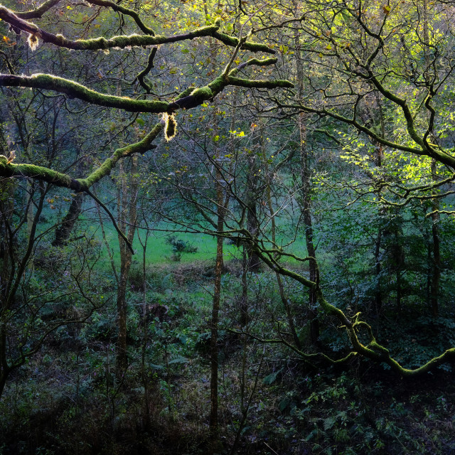 """Sunlights last gasp - Hardcastle Crags"" stock image"