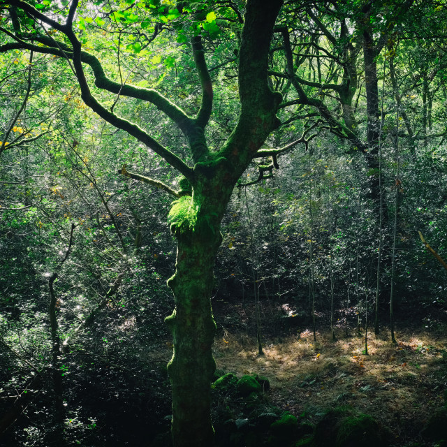 """""""The Woodland of Bell Hole"""" stock image"""