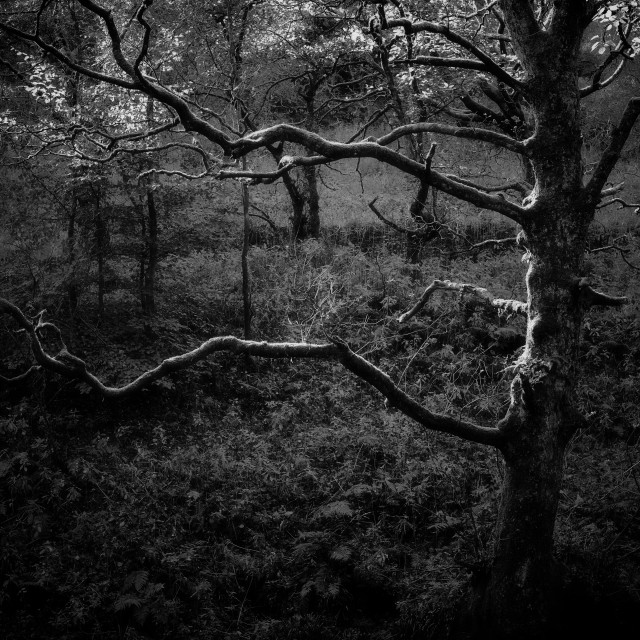 """""""Summers last breath at Hardcastle Crags"""" stock image"""