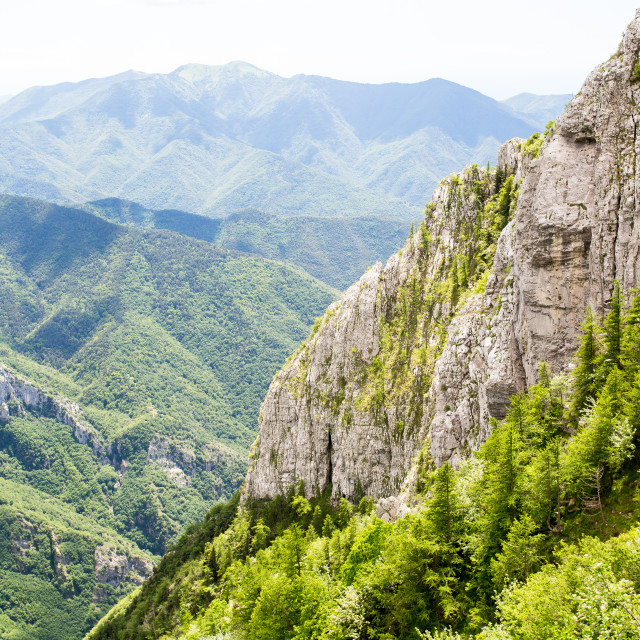 """Lush Ligurian Greenery"" stock image"