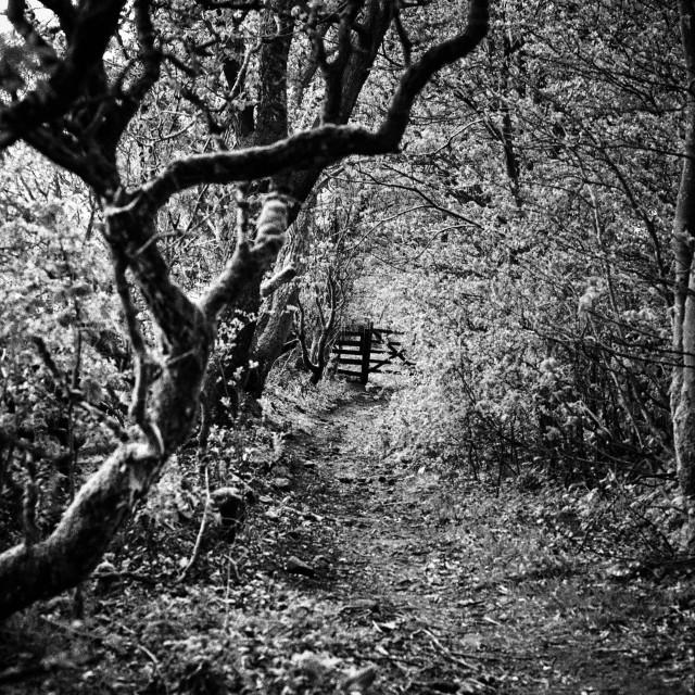 """The Path seldom Trodden - Calderdale"" stock image"