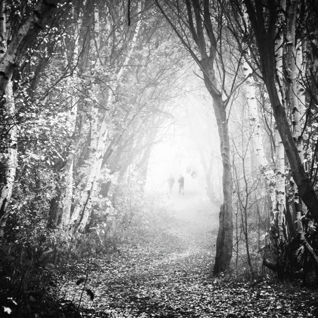 """""""Fog Walkers in Forest"""" stock image"""