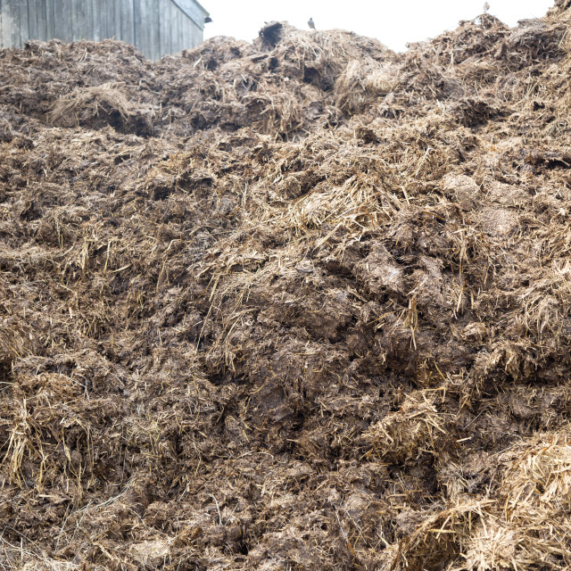 """""""Cow manure"""" stock image"""