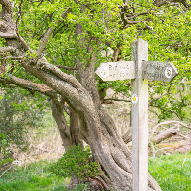 """""""Sign post in country Ringway Walk"""" stock image"""
