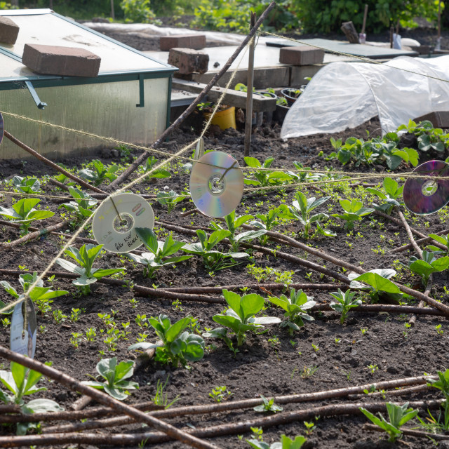 """""""Allotment view - recycled CDs as bird scarer"""" stock image"""