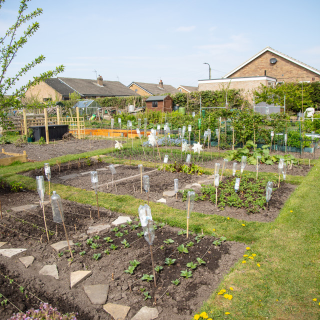 """""""Allotment view early spring - recycle plastic bottles"""" stock image"""