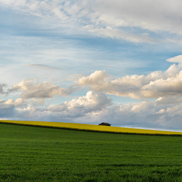 """""""Field. Colza Seeds. Oil. Spring. Stormy Sky"""" stock image"""