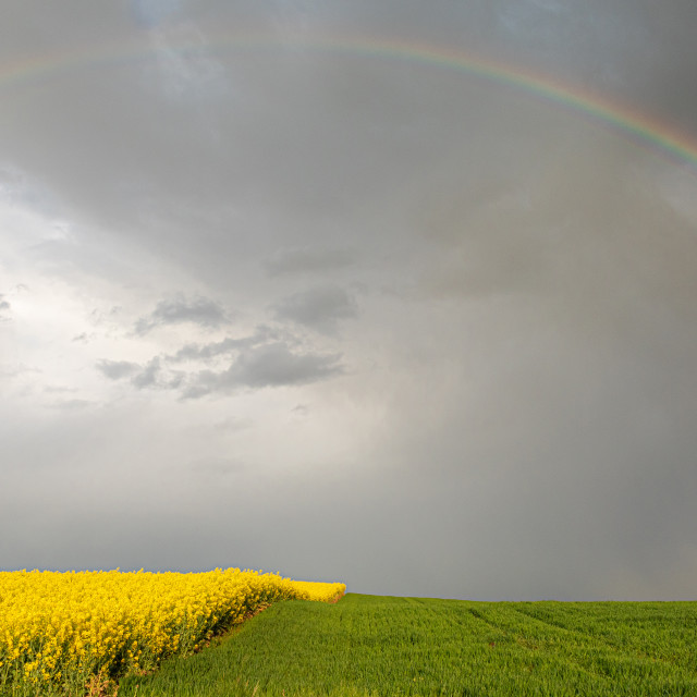 """""""Spring. Colza Seeds. Oil. Field. Stormy. Sky"""" stock image"""