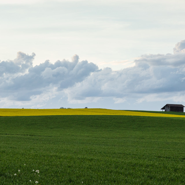 """""""Field. Colza. Seeds. Spring. Oil. Stormy. Sky"""" stock image"""