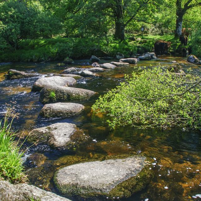 """Stepping Stones at Dartmeet, Dartmoor"" stock image"