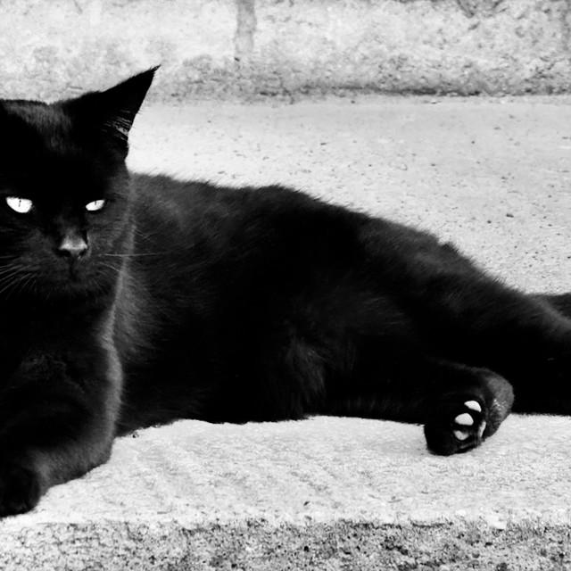 """Black Cat Lying Down"" stock image"
