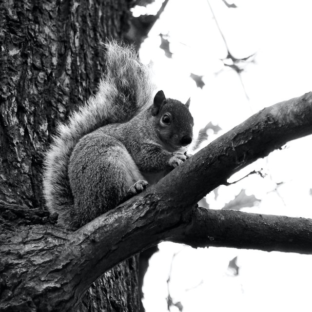 """""""Squirrel Sitting In A Tree"""" stock image"""