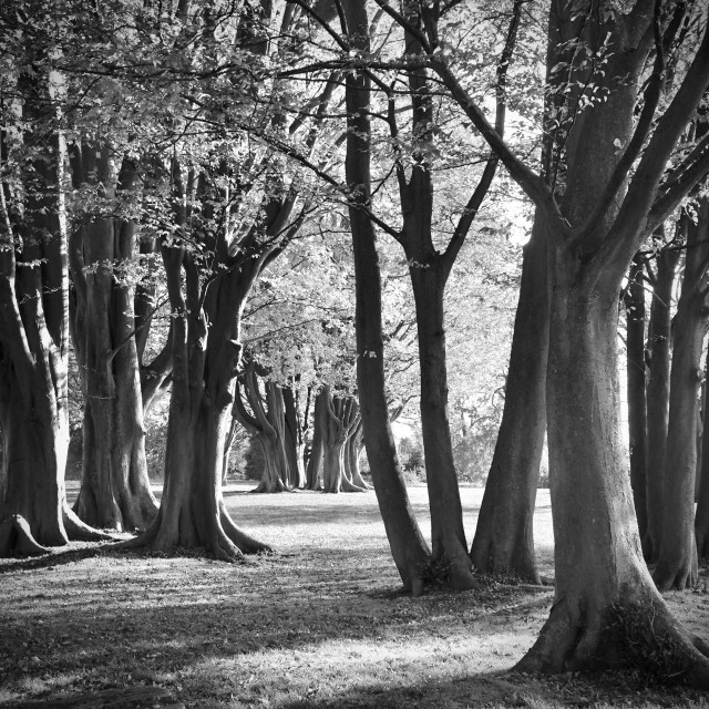 """""""Trees In Parkland"""" stock image"""