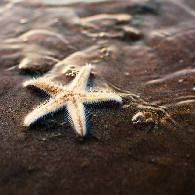 """Sea star on the sandy shore"" stock image"