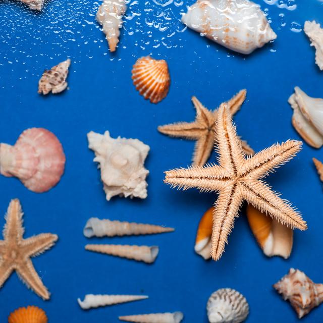 """Starfish seashells and summer symbols flat lay background"" stock image"