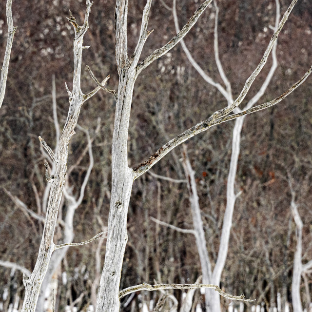 """""""Dead Forest 03"""" stock image"""