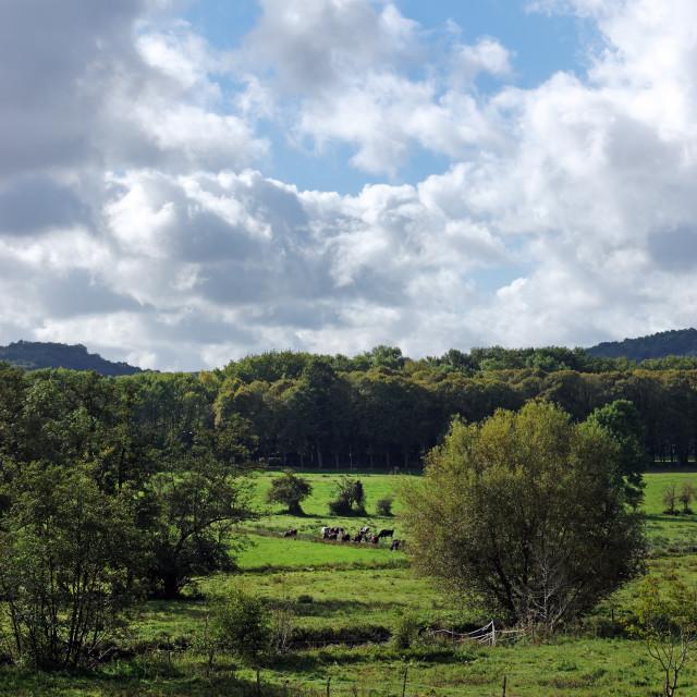 """""""Chevreuse valley"""" stock image"""