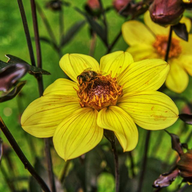 """Flower & Bee 4"" stock image"