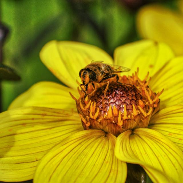 """Flower & Bee 5"" stock image"