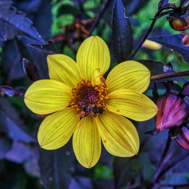"""Flower & Bee 3"" stock image"