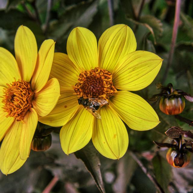 """Flower & Bee 2"" stock image"