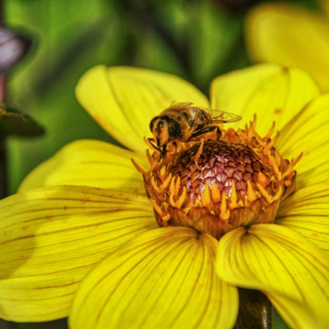 """Flower & Bee 6"" stock image"