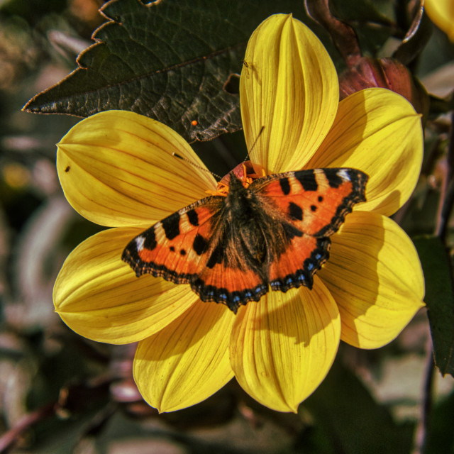 """""""Butterfly 7"""" stock image"""