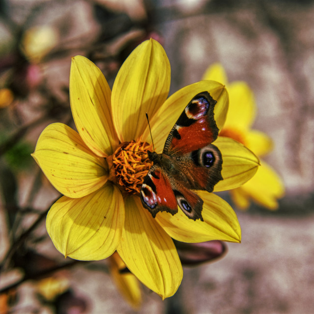 """""""Butterfly 2"""" stock image"""