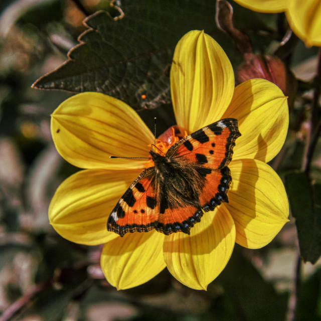 """""""Butterfly 6"""" stock image"""