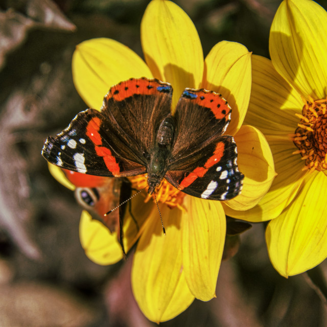 """""""Butterfly 10"""" stock image"""