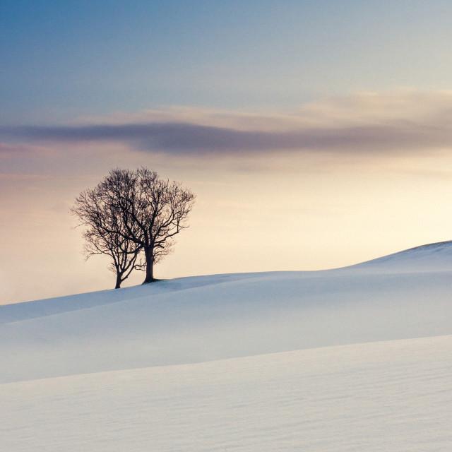 """Snowy Tree"" stock image"