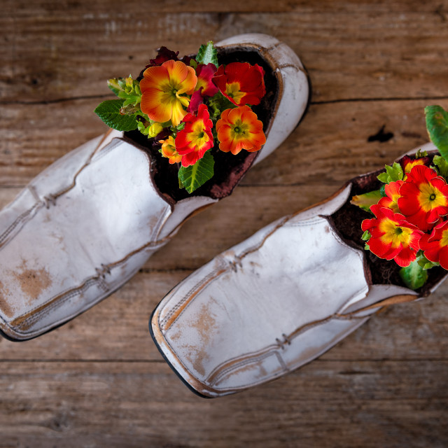 """""""Flowers in the shoes on the table"""" stock image"""