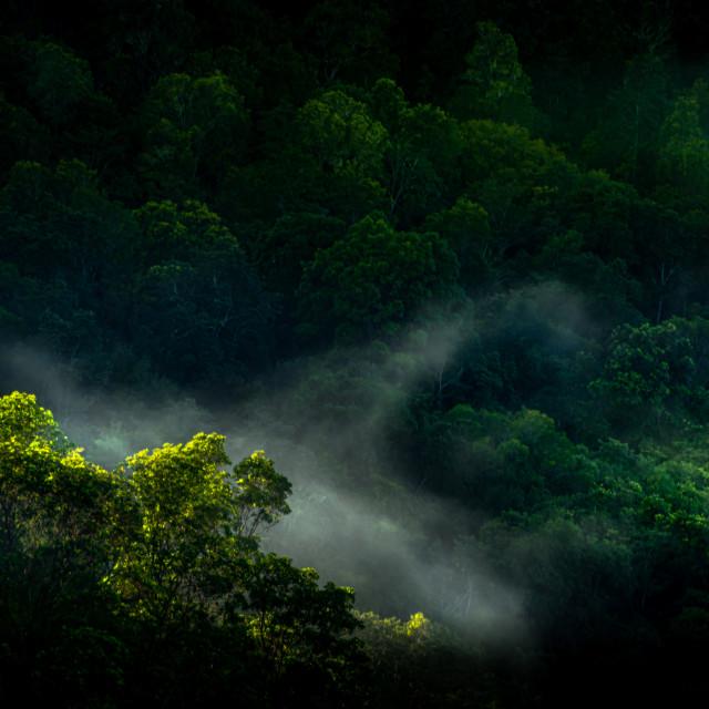 """Rainforest Delights"" stock image"