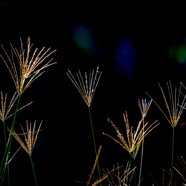 """Natures Light Show"" stock image"
