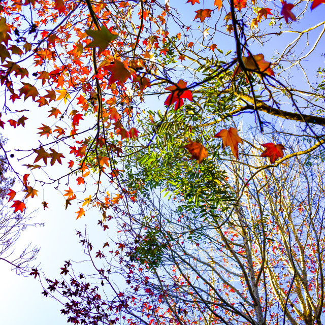 """Colours of Autumn"" stock image"
