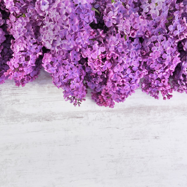 """""""top view on purple lilac flower arrangement on white table with"""" stock image"""