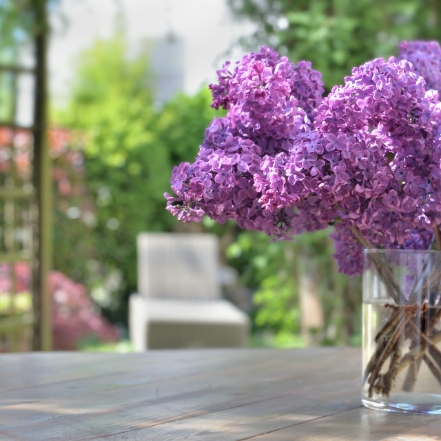 """""""beautiful bouquet of purple lilac flowers on a wooden table in garden"""" stock image"""