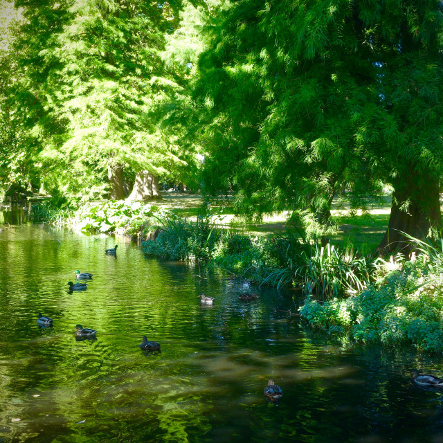 """""""Summer River Scene In Bushy Park"""" stock image"""