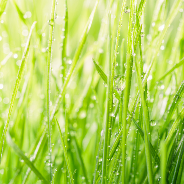"""""""Green grass background"""" stock image"""