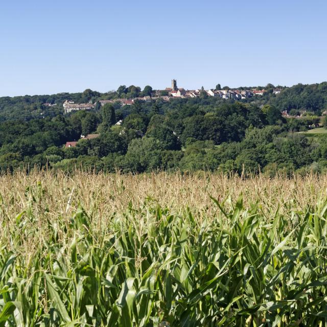 """Corn fields"" stock image"