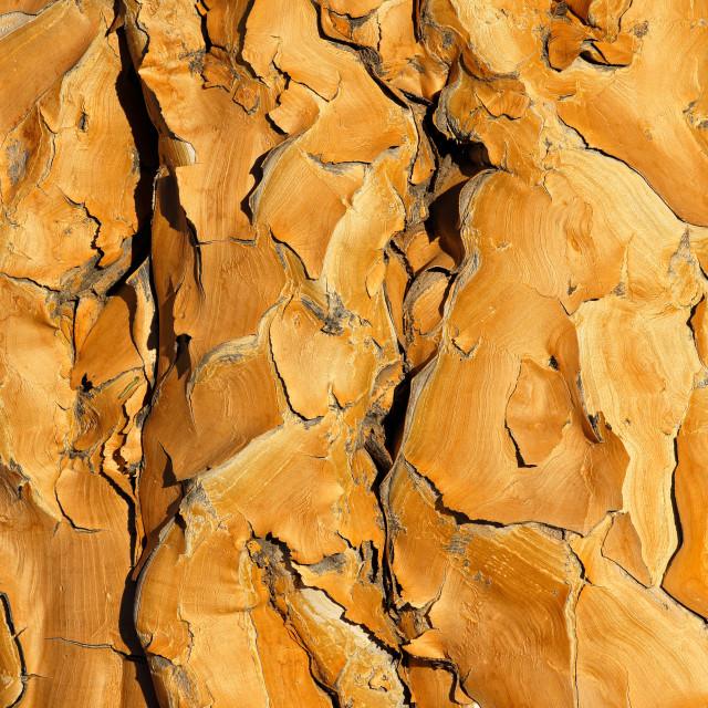 """Quiver tree bark background"" stock image"