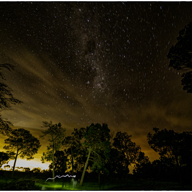 """""""Trees and Stars"""" stock image"""