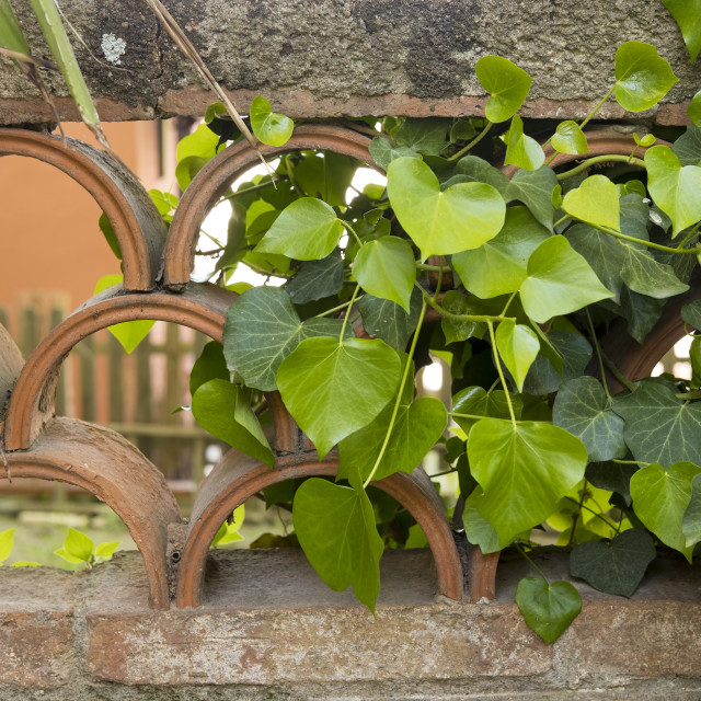 """detail of a Mediterranean style garden in Barcelona in the first"" stock image"