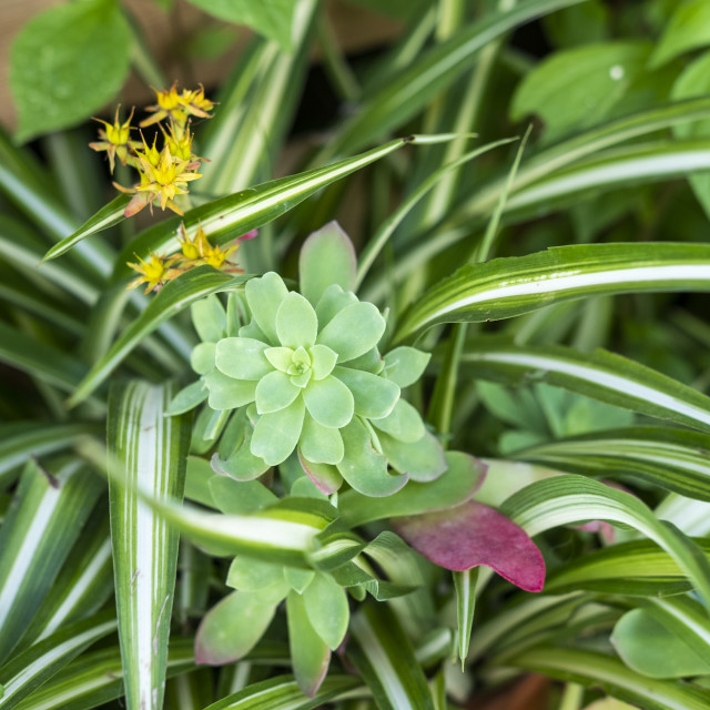 """""""succulent plant in a detail of a Mediterranean style garden in B"""" stock image"""
